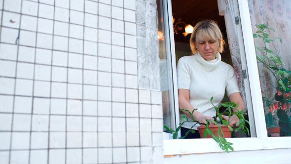 Woman In Open Window Planting A House Plant