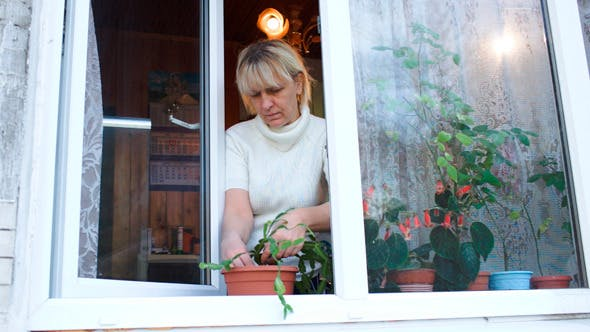 Thumbnail for Woman Planting A Houseplant Into Clay Pot