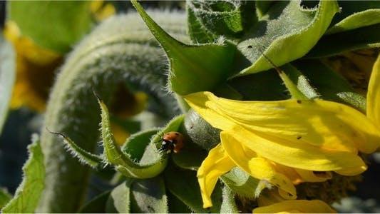 Thumbnail for Ladybug 3