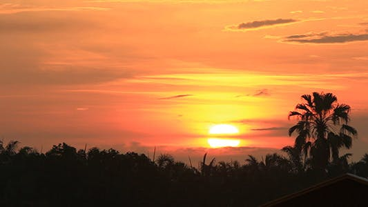 Rising Sun and Palm Tree