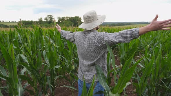 Close Up of Young Farmer Standing on Corn Field at Organic Farm and Raising Hands. Male Worker