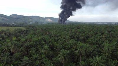 Aerial view fire burn near plantation