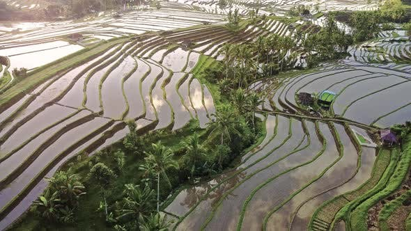 Thumbnail for Aerial video in an amazing landscape rice field on Jatiluwih Rice Terraces, Bali, Indonesia.