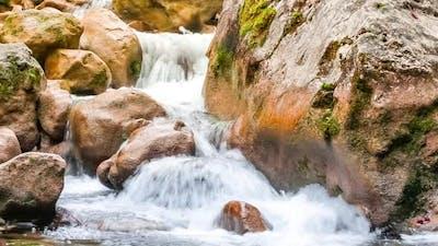 Stream Running Fast in Summer Green Forest