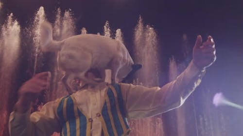 Circus performance with trick dog and animal tamer