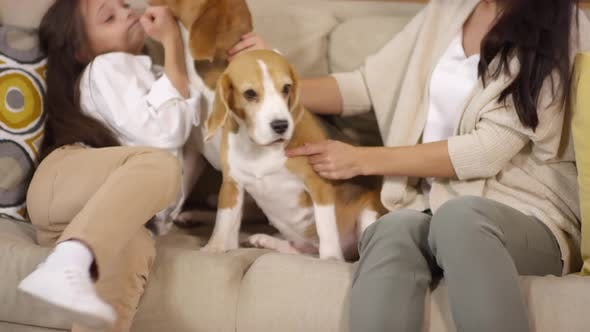 Thumbnail for Woman and Little Girl Cuddling with Beagle Dogs on Sofa