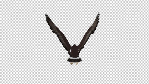 Black Hawk - Flying Loop - Back View