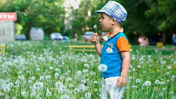Cover Image for Little Child Blowing Dandelion