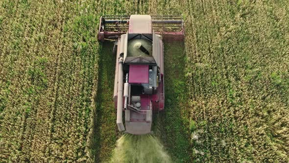Combine Harvester Removes Oats and Accumulates Grain in the Hopper