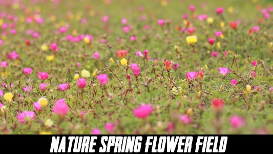 Cover Image for The Flower Field ( 5 pack )