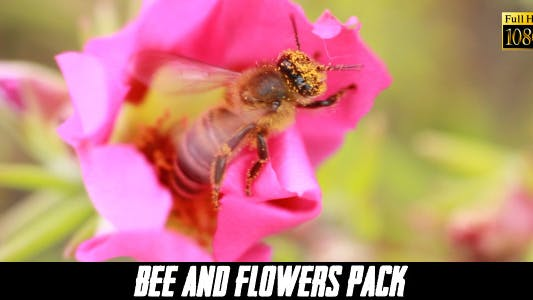 Thumbnail for Bee And Flower ( 4 Pack)