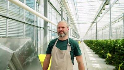 Bearded Man Walking in Flower Greenhouse