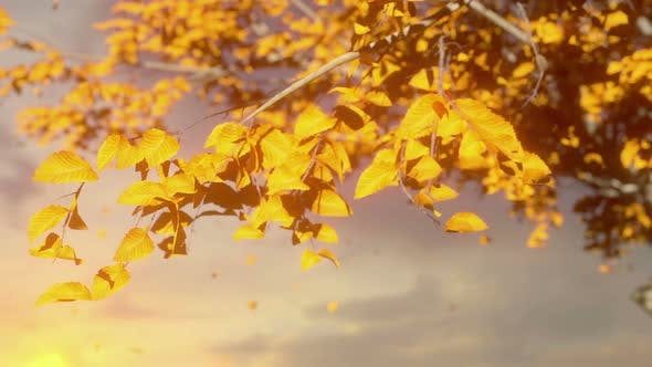 Thumbnail for Autumn Tree Leaves Sky Background