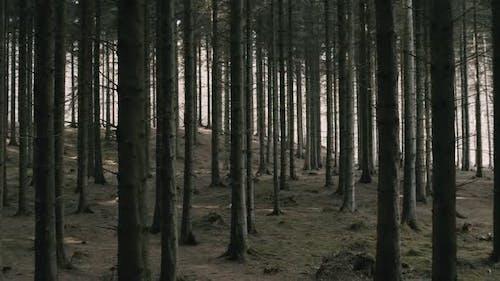 Bark of the Trees