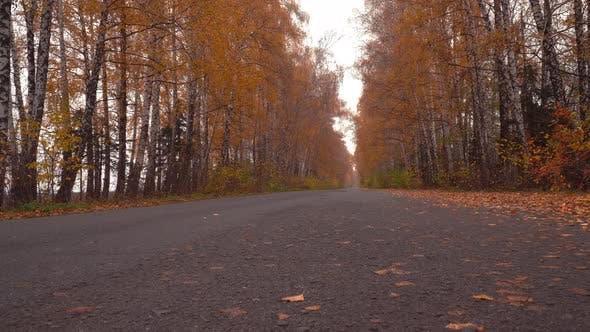 Cover Image for Mysterious Autumn Road