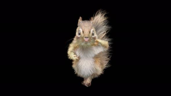 Thumbnail for Chipmunk Dancing 4K