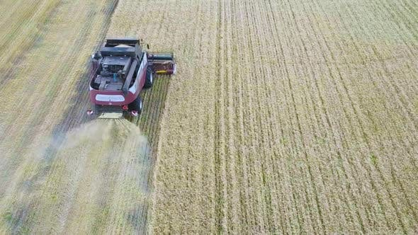 Thumbnail for Aerial View of Modern Combine Harvesting Wheat on the Field. Flying Directly Above Combine. Top View