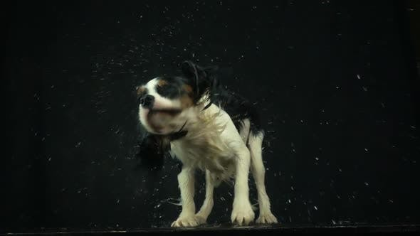 Thumbnail for Dog Shaking Off Water