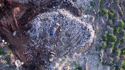Gulls Feeding on Food Waste Fly Over It
