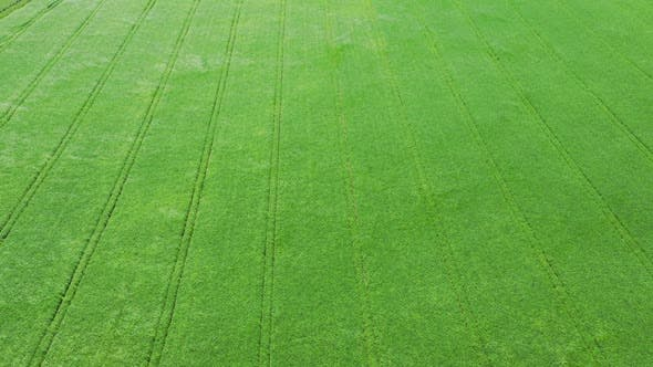 Thumbnail for Aerial View Green Field And Wind