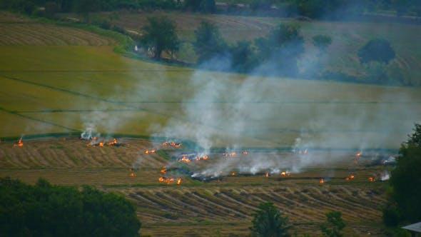 Fire On The Field