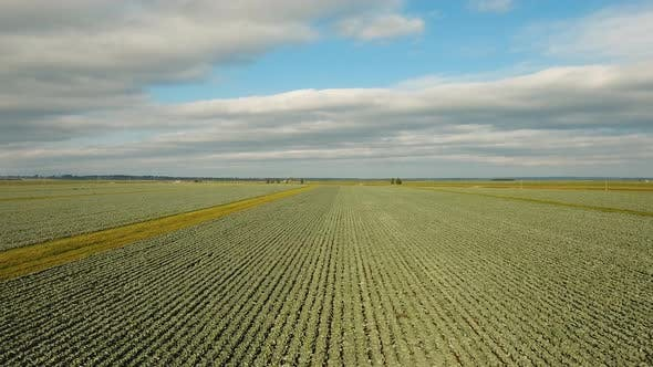 Thumbnail for Cabbage Field, Drone Footage