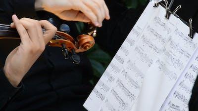 Violins on a Concert