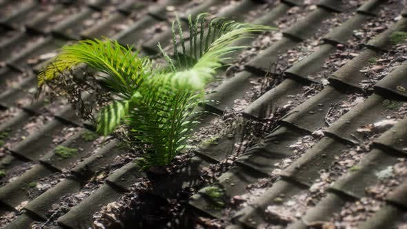 Thumbnail for Moss and Fern on Old Roof