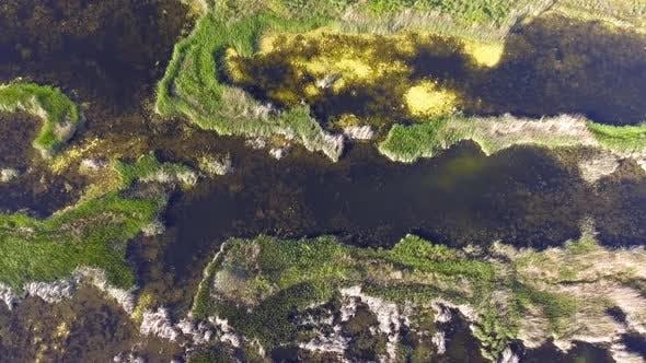 Thumbnail for Wetland Swamp