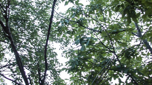 Looking Up The Trees