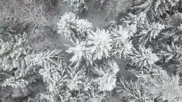 Thumbnail for Aerial: Flying Above the Forest in Winter
