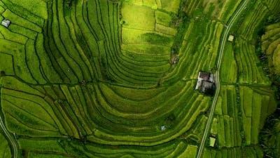 Beautiful Rice Field in Bali