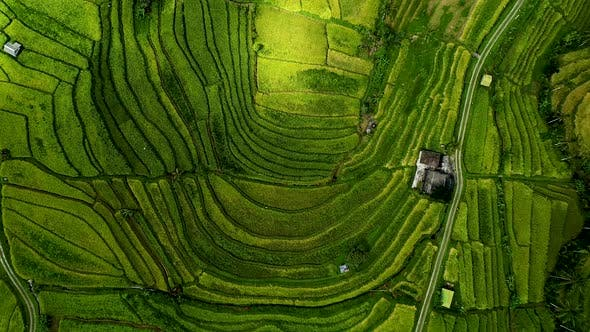 Thumbnail for Beautiful Rice Field in Bali