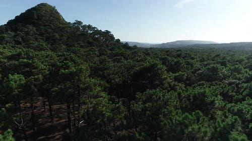 Pinewood of Leiria in Portugal
