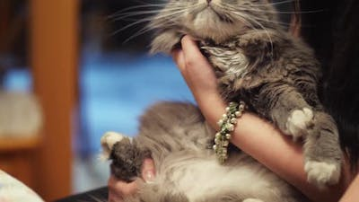 Cat Owners Stroking a Pet