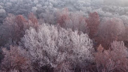 Frozen Forest In The Morning Aerial