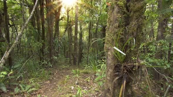 Thumbnail for Sun is shining in green primeval forest in New Zealand wilderness nature