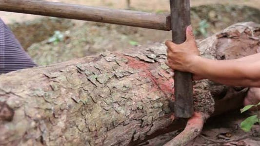Thumbnail for People Cutting Tree With Saw