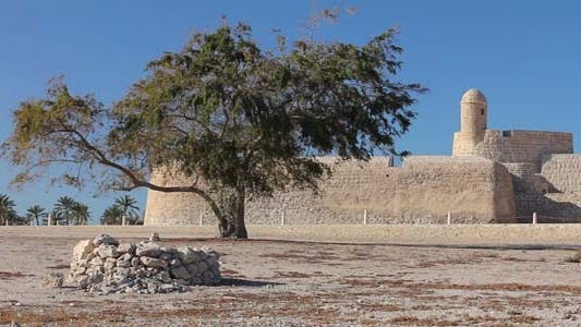 Thumbnail for Lonely Tree Of Bahrain Fort 2
