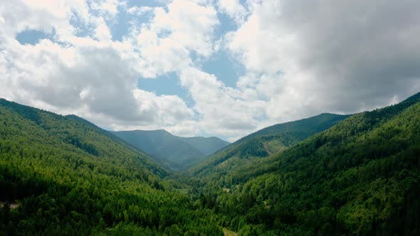 Thumbnail for Aerial Drone View. Green Pine Forest with Canopies of Spruce Trees in Summer Mountains. V4