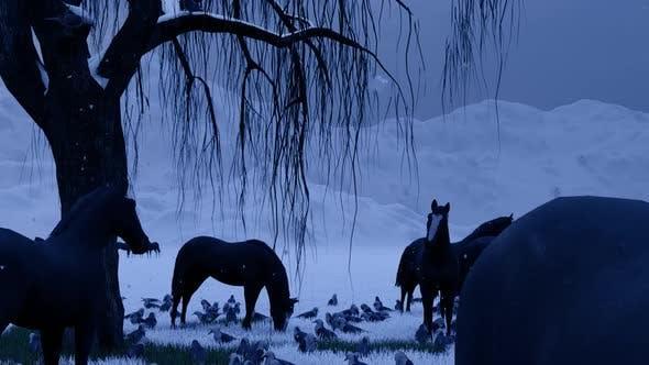Horse Farm and Snow Season