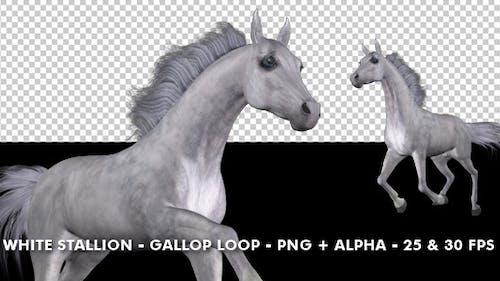 Horse Gallop - Weißer Hengst