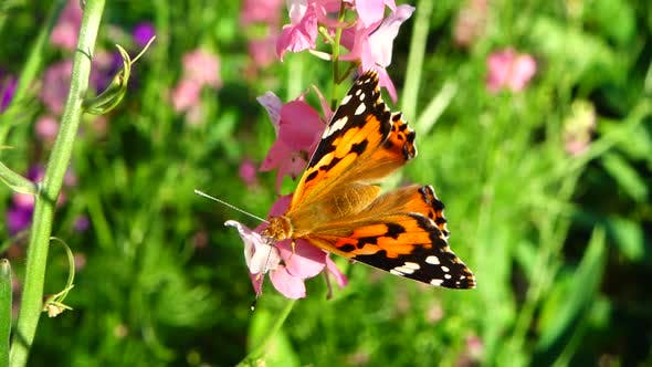 Butterfly and Flowers 2