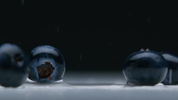 Thumbnail for Blueberry