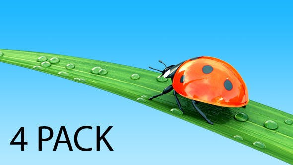 Ladybug on a Grass - 4 Pack