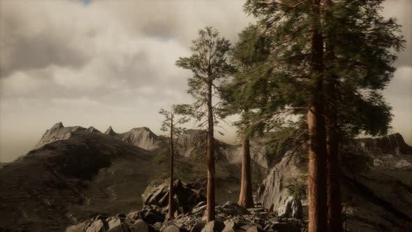 Klippe mit Bäumen und Licht der Sonne