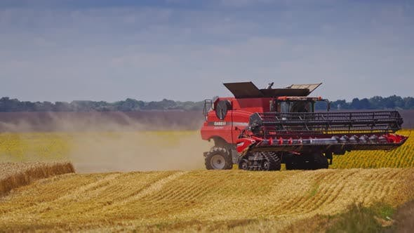 Thumbnail for Grain harvesting combine. Combine harvester in action on wheat field