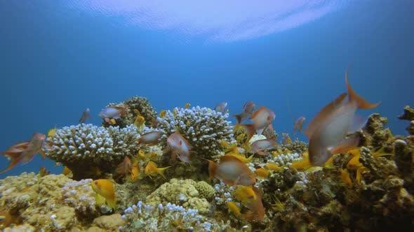 Thumbnail for Underwater Scene Marine Life