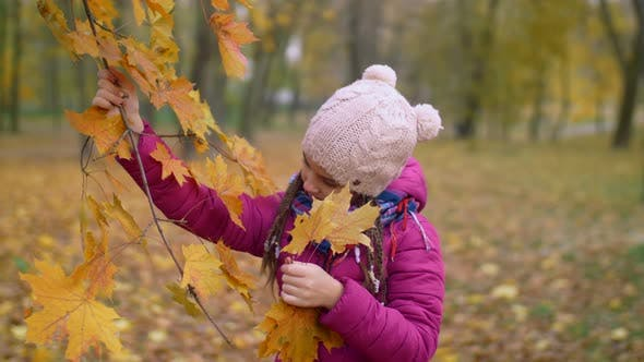 Thumbnail for Curious Girl Tearing Yellow Maple Leaves in Autumn