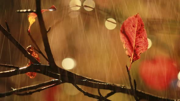 Thumbnail for Autumn Rain